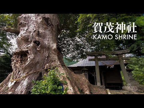 Real-life shinto shrines like the Ghost of Tsushima  - KAMO SHRINE -
