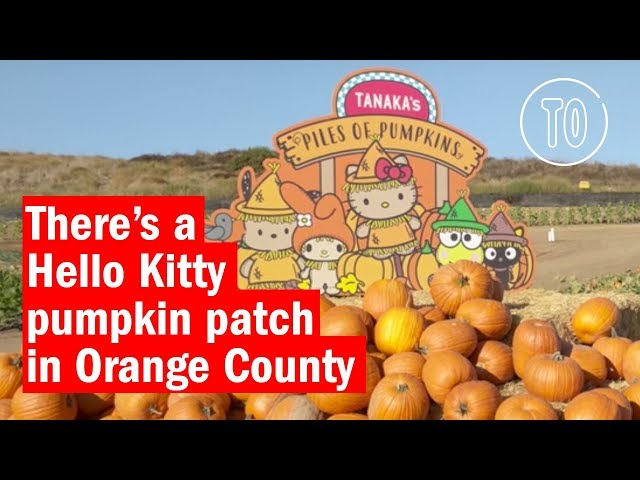 See Our Trip To The Tanaka Farms Hello Kitty Pumpkin Patch Last Year