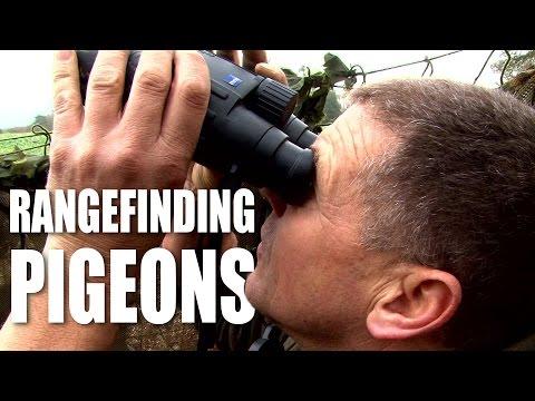 Rangefinding Pigeons
