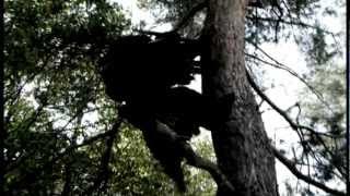 Dva havrani - Asonance oficiální videoklip skupiny