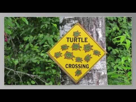 Critter Crossing Signs Along the Way | Roadtreking Across America