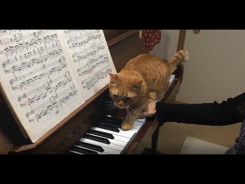 Chopinin etydi op. 10 no. 12, sävellajissa börh :3