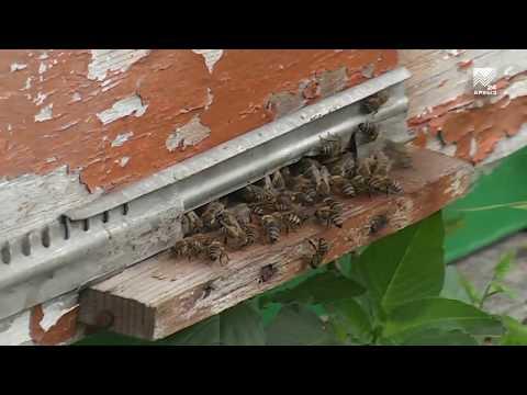 Пчеловодство – перспективная отрасль АПК