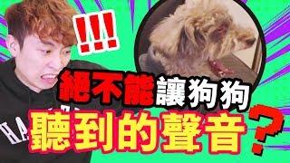【實驗】絕不能讓狗狗聽到的「聲音」?MUFFIN聽後發狂了...