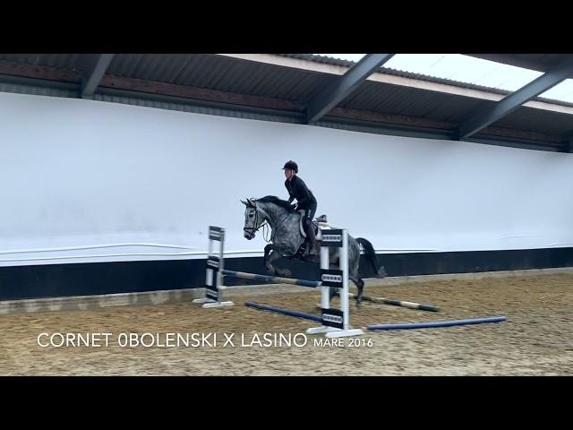 Lady Obolensky under the saddle