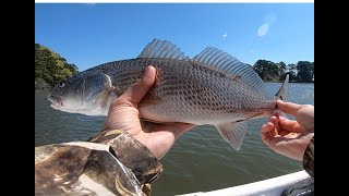 Catching Redfish in Challenging Wind Conditions (Redfish Tips)