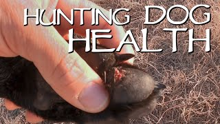 Hunting Dog Health - Why Roading Is Important For Your Dogs Pads