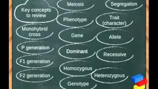 What Are Punnett Squares / Monohybrid Cross