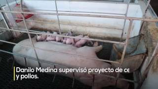 """Danilo visita productores cerdos y pollos en Bonao:""""Ustedes se convertirán en clase media"""""""