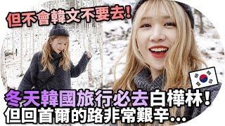 [Vlog] 韓國冬天旅遊必去!但不會韓文絕對回不了首爾!白樺林   Mira 咪拉