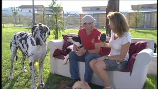 preview picture of video 'Dog Lodge Hundehotel Tannheim - TV-Beitrag BR 11.07.2013 Teil2'