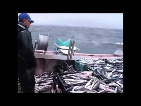 Câu cá kiểu công nghiệp