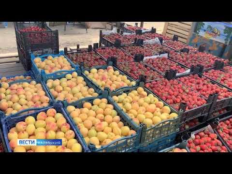 Управление Россельхознадзора контролирует соблюдение фитосанитарных требований при ввозе продукции растительного происхождения в Республику Калмыкия