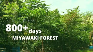 Man Made Forest at Puliyarakonam After 2 Years and 5 Months