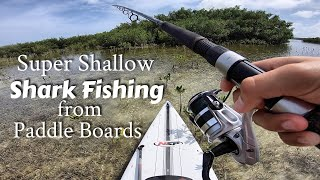 Super Shallow Shark Fishing from Stand Up Paddleboard - Ft. Hilary and Amelia
