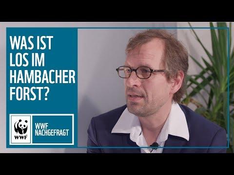 Hambacher Forst –Was ist los? | #nachgefragt | WWF Deutschland