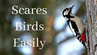 Bird Repellent Tape – The Best Deterrent To Scare Birds Away