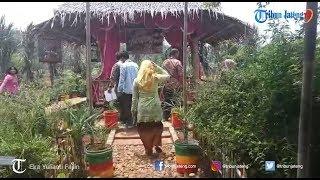 Taman Herbal Bejo Kelurahan Ngijo Manfaatkan Tanah Bengkok