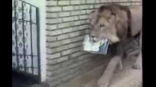 O Leão comemora 34 anos   Parte 3