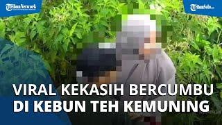 Viral Video Sepasang Kekasih Bercumbu di Tengah Kebun Teh Kemuning, Pelaku Diburu Polisi