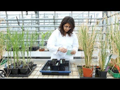 HHU - CEPLAS-movie - Imagefilm zur Arbeit des CEPLAS im Bereich Pflanzenforschung
