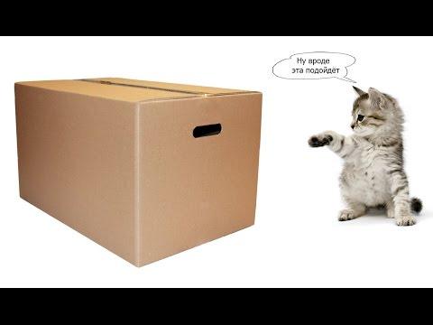 Биологи объяснили любовь кошек к коробкам