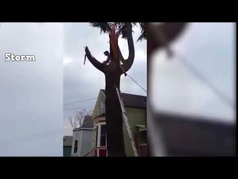 Download Tree Cutting Fails And Idiots With Chainsaws Fail Compilati