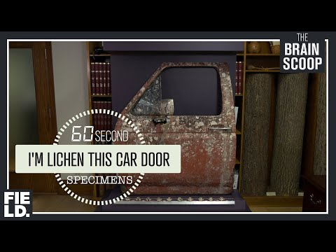 I'm Lichen This Car Door [60 Second Specimens]