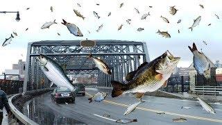 मछलियों की बारिश क्या सच में होता है ? || FISH RAIN FROM SKY - True or False?
