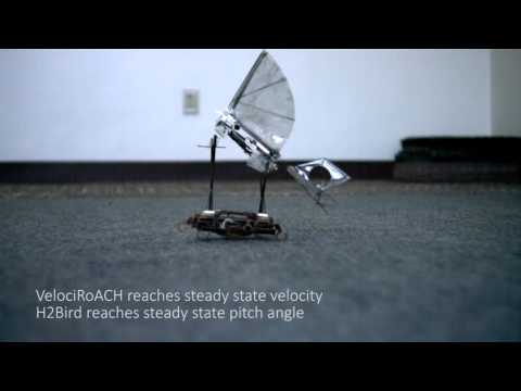 Robotic Cockroaches Are Perfect Tiny Aircraft Carriers For Robotic Birds