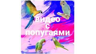 Подборка милых и смешных попугаев из инстаграма💙🐦