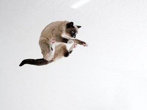 Con mèo với khả năng nhảy siêu phàm