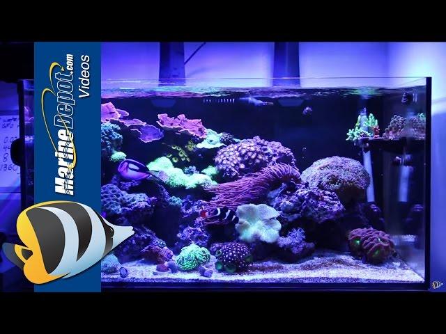 Marine Depot Featured Tank: CAD Lights Artisan 70 Gallon Reef Tank