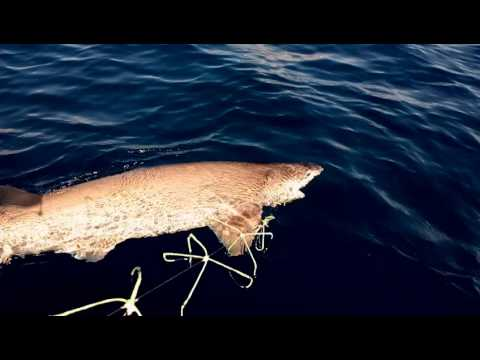 I pesci più grandi a pesca di video