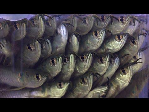 Visiting My Favorite Tropical Fish Store!