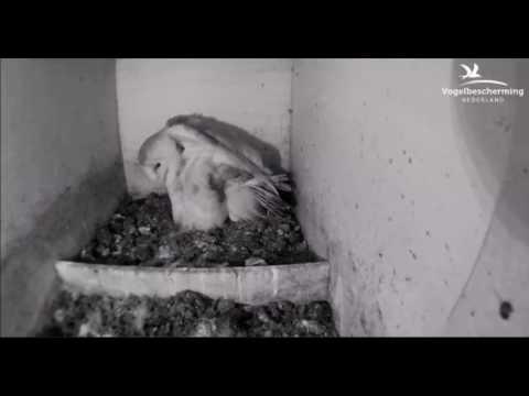 10.04.17 (Weibchen mit Eiern)
