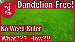 How To Get Rid Of Dandelions Without Weed Killer - Dandelion Free Lawn