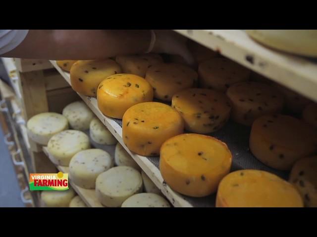 Virginia Farming: Dairy Industry