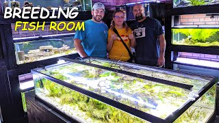 The Amount Of BABIES In His *Fish Room* Is IMPRESSIVE! - Breeding Fish Room