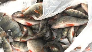 Рыбалка в саратове на волге окунь