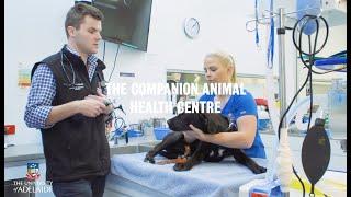 The Companion Animal Health Centre