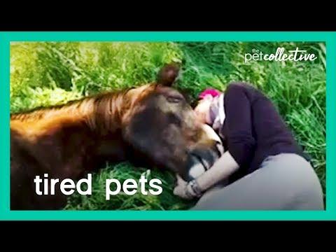 אוסף מקסים של חיות חמודות שפשוט רוצות ללכת לישון