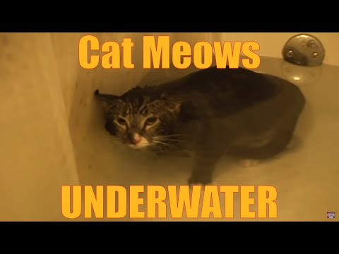 Cat meows underwater