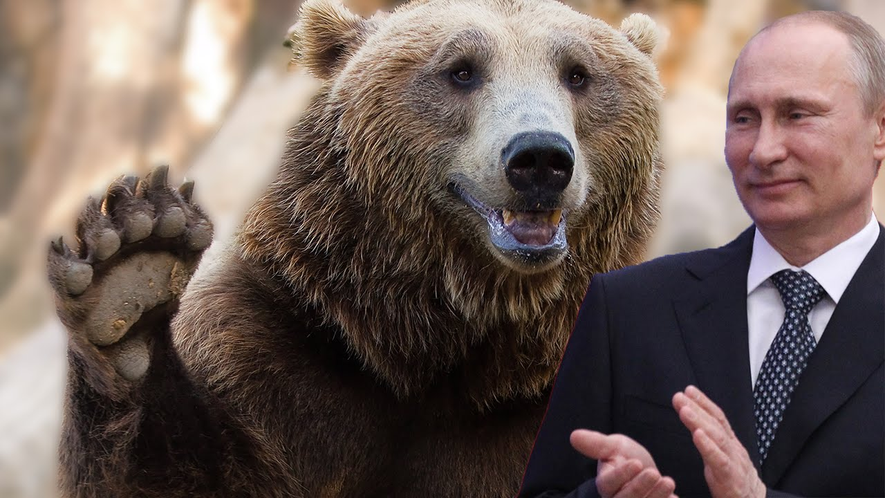 Putin Holds A Show-Stopping, Bear-Loving Press Conference thumbnail