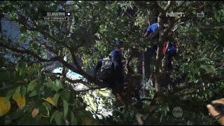Video Suporter Arema Nekat Nangkring Di Atas Pohon Nonton Pertandingan Dari Kejauhan - 86