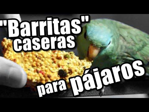 Barritas Galletas para pájaros caseras, muy fácil! |  PERIQUITOS, LOROS Y PSITÁCIDAS | Anabel Golop