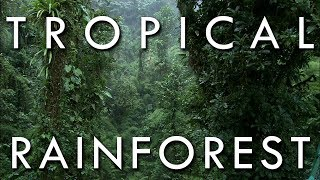 Tropical Rainforest - Secrets of World Climate, Episode 1