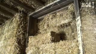 Воронежец строит полноценный загородный дом из соломы