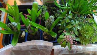 Обзор растений для сада