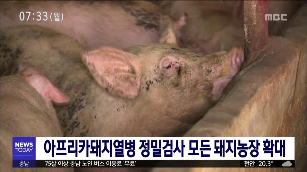 아프리카돼지열병 정밀검사 모든 돼지농장 확대